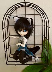 Meowww (Lunalila1) Tags: doll groove isul jimmyx blue ears cat chips neko sen