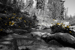 DSCF6145 (Miroslav Pivovarsky) Tags: vysoke tatry slovak slovakia natur nature outdoor fujifilm x70 mountains hiking hikings strbske pleso tarn sun day sunday