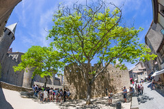 Tree in Carcassonne Cité - France (LB-fotos) Tags: 8mm carcassonne cité frankreich baum burg castle fisheye france menschen people tree