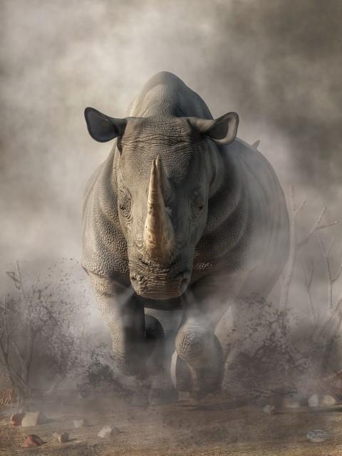 R Rhino Usage Warning The World's...