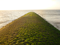 Grüne Buhne (Jörg Paul Kaspari) Tags: baltrum sommer 2017 abendsonne buhne basalt basaltbuhne begrünt bewachsen algen grün green grünebuhne meer nordsee küstenschutz ebbe damm meeresfinger