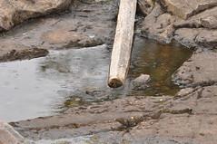 Light summer rain (viliris) Tags: summerrain ørfiske nordmarka nittedalmunicipality wood treetrunk stone water summer norway brown
