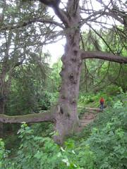 Ullswater-17.09 (davidmagier) Tags: aruna hiking trees matterdale cumbria england gbr