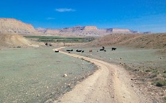 I proved my manliness... 20170410_9692 (listorama) Tags: usa utah greenriver cattle humor joke nonsense lie manliness cowbell morecowbell