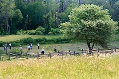 Meanwhile... (DaveLawler) Tags: farm field workers grass harvest trees sunlight woods osv osvorg sturbridge village fence landscape hay