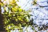 Still.....靜止...... (Evo-PlayLoud) Tags: canoneos550d canon550d canon 550d efs18135mmf3556 efs 18135mm 18135mmkit dslr hdr reflection stilllife still stilllifephotography leaf water pond green wulingfarm taiwan 倒影 反射 樹葉 樹 池塘 水池 武陵農場 台灣 台中 靜止 ripple 漣漪