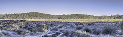 Early Morning Frost on Pol Blue Swamp (Arcus Cloud) Tags: hdrlandscapes hdrlandscape plateau barringtontopsplateau australiannationalparks nationalpark barringtontopsnationalpark barringtontops hunterregion newsouthwales nsw landscapes landscape australianlandscape australialandscape highcountry alpine alpineswamp swamp panorama hdrpanorama pano hdr australia winter polblueswamp polblue belowzero earlymorning cold frostymorning frosty frost