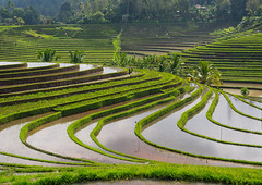 The terraced rice fields, Bali island, Jatiluwih, Indonesia (Eric Lafforgue) Tags: agricultural agriculture asia asian bali2037 balinese breathtaking countryside crops cultivated culture farming farmland fields green growing horizontal indonesia indonesian irrigation landscape lush nature outdoors paddies reflection ricefields ricepaddies riceterraces rural scenery scenic subak terracefarming terraced terraces terracing twopeople unescoworldheritagesite verdant village water jatiluwih baliisland