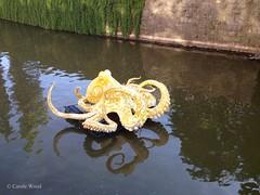 Prague - Rivière Vltava (Moldau) - Sculpture Line 2017 (Fontaines de Rome) Tags: prague rivière vltava sculpture line 2017 praha octopus viktor paluš