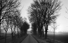 Silent sunrise (Rosenthal Photography) Tags: nebel landschaft twiste 20170502 35mm bäume wense asa400 pflanzen strase ff135 ilfordxp2 c41 bw städte olympus35rd analog anderlingen dörfer siedlungen landscape path track road trees oaks oak olympus 35rd ilford xp2 40mm epson v800 bnw blackandwhite fog mist
