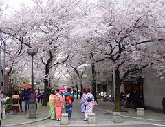 Gion (Kaeko) Tags: gion street people kyoto japan tree flower sakura cherryblossom travel trip holiday vacation