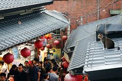 九份街上的貓 IMG_101308 (Cookie Chang X 小餅) Tags: 台北 新北 瑞芳 貓 動物 貓咪 喵星人 canon 6d 街道 街景 風景 2470f4is 2470 九份 九份老街