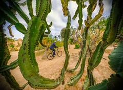 Bike Frame (Keoni Cabral) Tags: activity balboapark bicycle bike bikehelmet biking cactus frame framing helmet nature outdoors outside pain painful ride sandiego socal superwideangle wideangle california unitedstates us