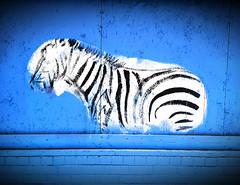 f_zebrafitti (ricksoloway) Tags: streetart arizonamojo grafitti tucsonarizona thewest animals cameraphone samsungs6 galaxys6