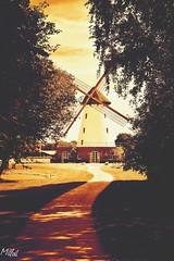 Elfrather Windmühle (Tanja-Milfoil) Tags: nikon germany deutschland nordrheinwestfalen elfrathermühle elfrath elfrather restaurant mühle windmühlen mill windmill picture aufnahme milfoil tanja krefeld