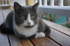 Ada Cat (interestedbystandr) Tags: ada cat verandah