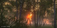 Wittmoor - 20061707 (Klaus Kehrls) Tags: wittmoor hamburg landschaft natur sonnenaufgang wald birken nebel