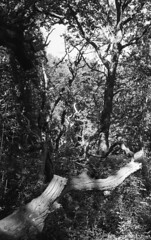 Branch (Arne Kuilman) Tags: castricum trees forest bomen kentmere kentmere100 iso100 blackandwhite homedeveloped rodinalspezial rodinal 135 yashica yashica35gx gx k100 scan epson v600 1200dpi 354311 film believeinfilm rangefinder manualfocus noordhollandsduinreservaat
