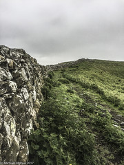 ....along the wall, on the crags...... (mishlove1) Tags: britian cumbria england greatbritian hadrians hadrianswall hadrianswallwalk hike hikehiking hiking northofengland omdem10ii olympus travel uk vacation iphone