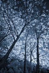 A dream away (citrusjig) Tags: pentax kx infrared irconverted fullspectrum wisconsin blackandwhite toned sigma1020mmf456 bw090redfilter