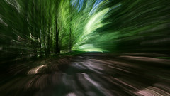 Direction East ([Alan]) Tags: intentionalcameramovement icm woods path forest germany buchenwald