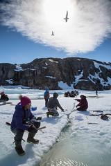 Working the line (Clare Kines Photography) Tags: arctic gull fish birds icefishing inuit nunavut larushyperboreus fishing north char ikpikitarjuk canada arcticbay seaice glaucousgull ice
