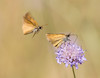 This Flower is Mine (Bai R.) Tags: flower flor butterlfly mariposa nature summer nikkor105mmf28gvrmicro