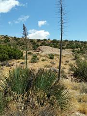 Vasquez Rocks Natural Area Park 2017 62 (dever_brett) Tags: california desert mojave vasquez vasquezrocks