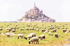 Sheep of Mont Saint-Michel (Loïc Lagarde) Tags: canoneos5dmarkiii