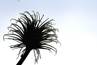 Macro Mondays - Silhouette
