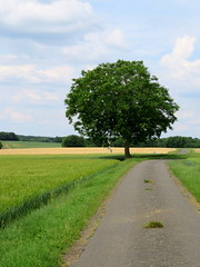 Only tree (Esteban 86360) Tags: tree arbre france nature poitou charentes chauvigny nouvelleaquitaine aquitaine vienne route campagne country culture agriculture field chemin street road europe paysage printemps green vert
