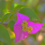 Purple Shade thumbnail