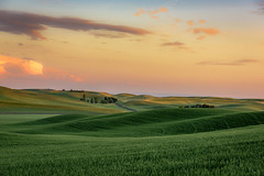Sunset over wheat fields near Palouse, Eastern Washington State (diana_robinson) Tags: sunset wheatfields windingroad palouse easternwashingtonstate farm wheatgrowing greenwheat rollinghills landscape empty noone noperson wheat sky washingtonstate agriculture rural countryside crop summer field nature bluesky plantsgrowing wideopenspaces solitude easternwashington