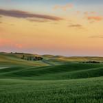 Sunset over wheat fields near Palouse, Eastern Washington State thumbnail