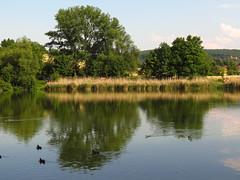 at pond (germancute) Tags: outdoor nature teich park plant pond thuringia thüringen tree