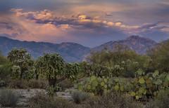 JSM_3238catalinas3jsm (JayEssEmm) Tags: santa catalina mountains tucson arizona az cactus sunset jsmcelvery mcelvery