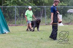 GSD-4378 (jim_lamy) Tags: gsd ipo germanshepherd schutzhund workingdog