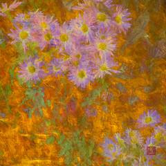 G47A1140-Edit-2-Edit-Edit-2.jpg (kevinliang8) Tags: centralparknyc digitalpaintings flower