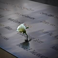 In Memoriam (tim.perdue) Tags: nyc new york city manhattan big apple metropolis urban lower downtown 911 memorial september 11th rose memoriam flower
