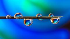Blue - 3290 (YᗩSᗰIᘉᗴ HᗴᘉS +6 500 000 thx❀) Tags: réflexion drop drops needle droplet droplets blue macro color hensyasmine 7dwf
