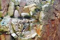 Heather on rock face. (artanglerPD) Tags: heather rockface lines pattern