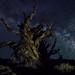 Methuselah's Milkyway
