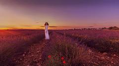 Como un hada (Julieta Portel) Tags: brihuega lavanda campo surco flores hada amapolas cuento story verano flora lavender
