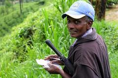 Sri Lanka, tea pickers (30) (walterkolkma) Tags: srilanka tea pickers teapickers centralhighlands nuwaraeliya strathdon teaestates women laborers tamils sonya6300