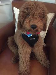 Ruby Red's sweet little boy Tucker!