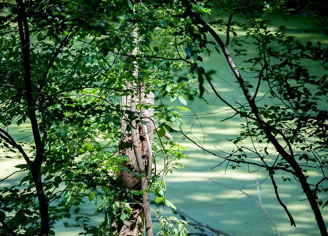 Ropchan Memorial Nature Preserve - June 20, 2017
