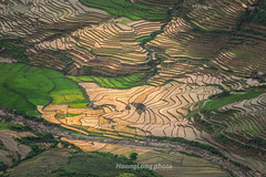 File866.0617.Trồng Tồng.Cao Phạ.Mù Cang Chải.Yên Bái (hoanglongphoto) Tags: asia asian vietnam northvietnam northwestvietnam landscape scenery vietnamlandscape vietnamscenery vietnamscene terraces terracedfields terracedfieldsatvietnam transplantingseason sowingseeds valley flankmountain sunset abstract curves hdr canon canoneos1dsmarkiii canonef70200mmf28lisiiusmlens tâybắc yênbái caophạ lìmmông phongcảnh ruộngbậcthang ruộngbậcthangmùcangchải thunglũnglìmmông mùacấy đổnước mùacấymùcangchải đổnướcmùcangchải afternoon buổichiều hoànghôn đườngcong trừutượng thunglũng sườnnúi