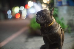dog (ozzy5836) Tags: bokeh night dog a7r sony f095 50mm canon