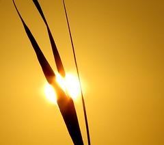 IMG_0121x (gzammarchi) Tags: italia paesaggio natura mare ravenna lidodidante alba sole canna coppia monocrome