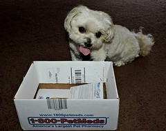 I Entered This Photo In A Contest But..... (marilyntunaitis) Tags: dog pet bella 1800pedmedpet box contest